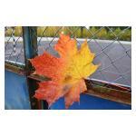 Осенний фотокросс в Губернаторском парке